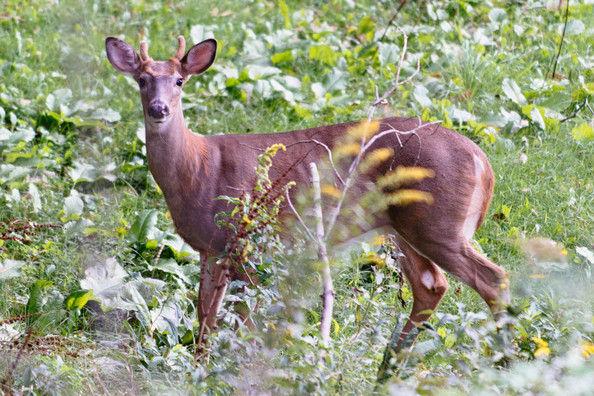 deer-9.jpg