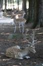 Southwick Zoo (7 of 15).jpg