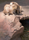 Southwick Zoo (9 of 12) copy.jpg