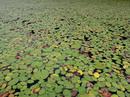 holbrook-pond-2.jpg